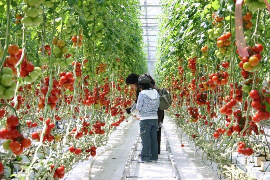 【商品開発中!】福島のトマトを活かした商品をプロデュース!あなたも食卓で、キッチンで本当に使いたくなる商品って?