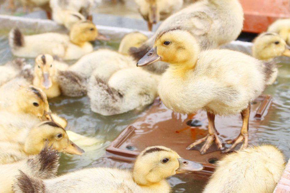 【参加レポート】Duck Dayに参加してきました!