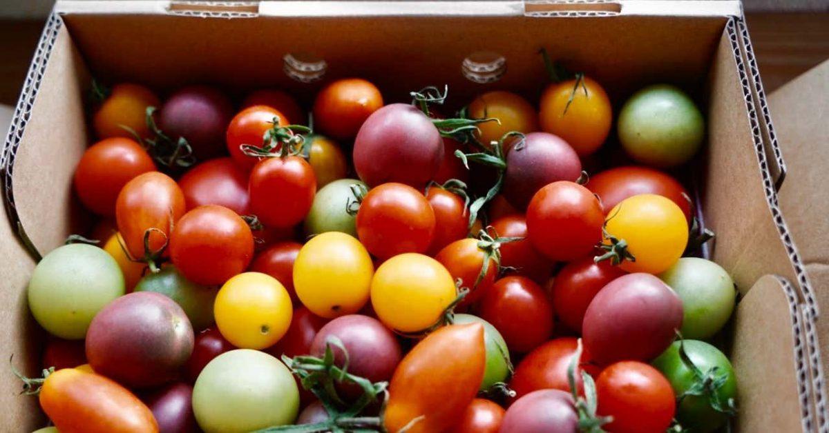 福島県いわき市、ワンダーファームのトマト農園へのバーチャルツアーを開催しました